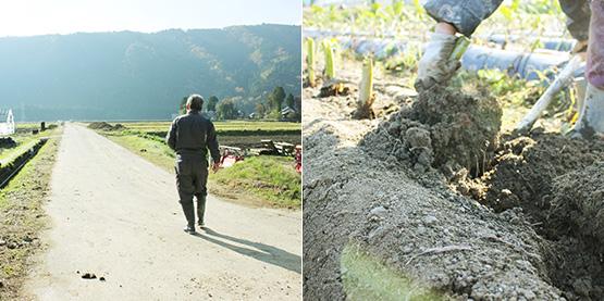 里芋畑に案内する建石さん(左)、畑から里芋を掘り出す(右)