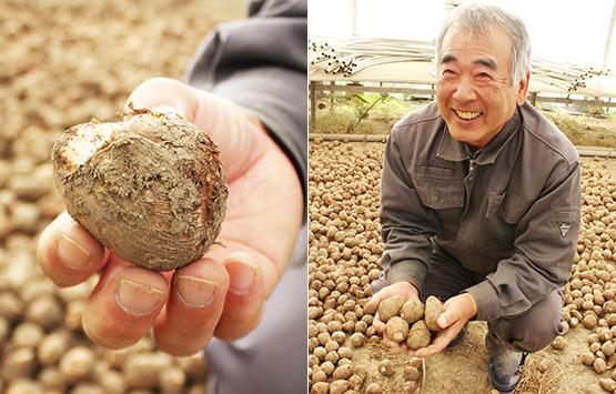 里芋を持つ手(左)里芋を両手に持つ建石さん(右)